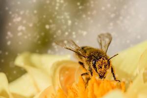 ไททา จับคู่เกษตรกร สวนผลไม้- ผู้เลี้ยงผึ้ง กว่า 100 คู่ ผลิตน้ำผึ้งปลอดภัย