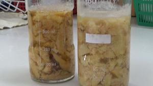 ได้ผล!ม.พะเยา วิจัยแล้ว ใช้แบคทีเรียพันธุ์ใหม่พัฒนาอาหารโคนม ลดต้นทุนเกือบครึ่ง-เพิ่มน้ำนมจริง(ชมคลิป)