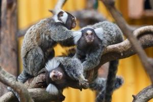 สวนสัตว์เปิดเขาเขียว จ.ชลบุรี จัดกิจกรรมเฉลิมฉลองปีใหม่รับนักท่องเที่ยว