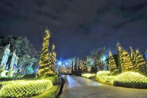 สีสันงานศิลปะ สายหมอก และดอกไม้เมืองเลย ยามราตรี(ภาพ : ททท.เลย)