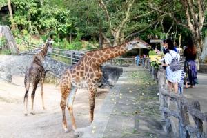 สวนสัตว์เปิดเขาเขียว