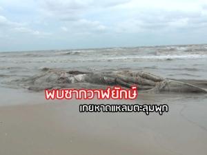 ผงะเจอซากวาฬยักษ์ลอยเกยหาดแหลมตะลุมพุก หวั่นสัญญาณเตือนภัยธรรมชาติ