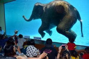 รู้ยัง!! วันเด็กปีนี้สวนสัตว์เปิดเขาเขียวเปิดให้เด็กเที่ยวฟรี