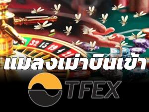 แมลงเม่าบินเข้า TFEX / สุนันท์ ศรีจันทรา