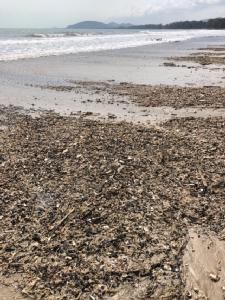 ปาบึกทิ้งซากสัตว์ทะเล พร้อมขยะเกยหาดหัวดอน ชาวบ้านเก็บไว้ไปทำโมบายขาย