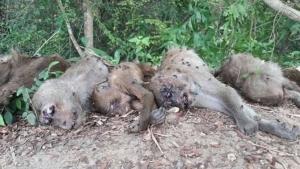 พบฝูงลิงแสมริมคลองบ้านยางงาม จ.ระยอง ถูกวางยาตายเกลื่อน เชื่อฝีมือคนใจยักษ์