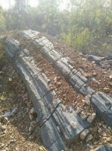 ฮือฮา! พบต้นไม้กลายเป็นหินในพื้นที่เมืองพิจิตร คอหวยไม่พลาดแห่จุดธูปขอเลขเด็ด