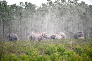 ครั้งแรกในไทย ติดปลอกคอช้างป่าสำเร็จ หวังแก้ปัญหาความขัดแย้งคน-ช้างป่า