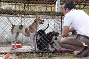 สมาคมป้องกันการทารุณสัตว์ฯ แจงหนุ่มโชว์คลิปสุนัขที่เลี้ยงไว้ฆ่าลูกแมว เข้าข่ายการทารุณกรรมสัตว์