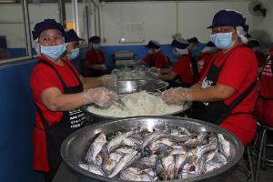 วช.ชูความสำเร็จปลาร้าปลาส้มลดพยาธิใบไม้ตับ