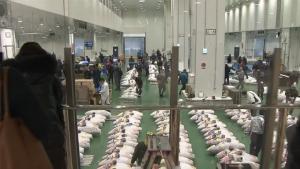 """ตลาด """"โทโยสุ"""" เปิดให้นักท่องเที่ยวเข้าชมการประมูลปลาได้แล้ว"""