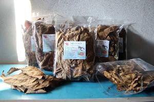 ใบหูกวางขายได้! เอาใจคนเลี้ยงปลากัดไทยพ่วงต่างชาติ ส่งออกราคาสูงลิ่ว
