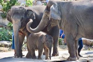 สวนสัตว์เปิดเขาเขียวชวนชมสวน รับอั่งเป่า ฉลองตรุษจีนปีหมูทอง