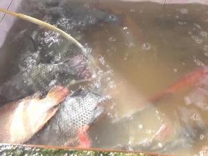 คุณลุงยึดอาชีพเลี้ยงปลาในกระชังริมแม่น้ำตรัง สร้างรายได้ให้เดือนละกว่า 1.5 แสนบาท