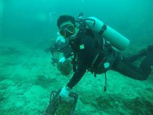 สบ.ทช.10 จับมือนักดำน้ำอาสาเลตรังไดพ์วิ่ง ปลูกปะการัง 2,500 กิ่ง เล็งงัดมาตรการเข้มเรือทิ้งสมอเขตหวงห้าม