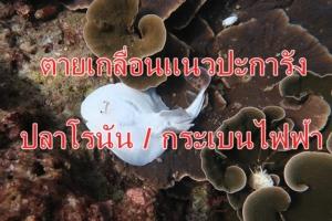 แชร์สนั่นซากปลาโรนัน และ ปลากระเบนไฟฟ้า ตายเกลื่อนบนแนวปะการัง เกาะราชา