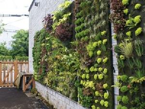 """แนะสร้าง """"Green wall"""" ปกป้องฝุ่น PM2.5 ในระยะยาว"""