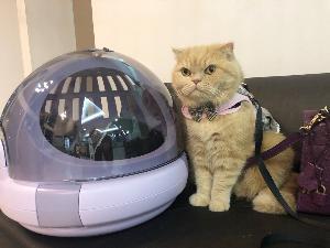 ต้อนรับเทศกาลแห่งความรัก กับกองทัพแมวเซเลบ ในงาน Cat Lover Valentine 13-20 ก.พ.นี้ ที่ศูนย์การค้าเซ็นทรัลพลาซา พิษณุโลก