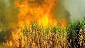 การเผาอ้อย คือสาเหตุที่ทำให้ค่าฝุ่นพิษในจ.ขอนแก่น พุ่ง