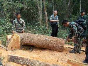 รวบผู้ต้องหาลักลอบตัดไม้ในเขตอุทยาน พร้อมของกลางหลายรายการ