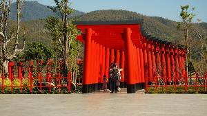 วาเลนไทน์นี้สะพรั่งชัวร์! ซากุระญี่ปุ่นแท้ สั่งตรงเกาะซูซูพันต้นผลิดอกเต็มสวนฮิโนกิแลนด์แล้ว(ชมคลิป)