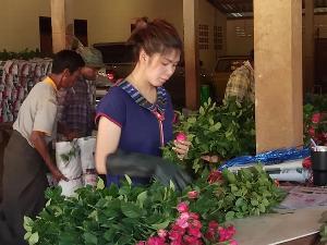 ใกล้วาเลนไทน์ กุหลาบสีแดงออกดอกน้อยดันราคาขายส่งพุ่ง ชาวสวนพบพระเร่งตัดส่งปากคลองตลาด