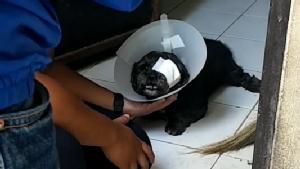 หนุ่มโพสต์ประณามไอ้โหดทำร้ายหมาพุดเดิ้ลตาหลุดออกจากเบ้า-เลือดสาดจนบอด