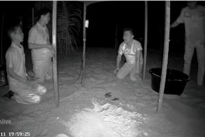 เฮลั่น! ลูกเต่ามะเฟืองชุดแรกที่หาดคึกคัก ฟักออกจากไข่แล้ว