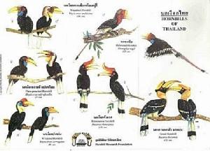 """ทำไม""""นกเงือก""""เป็นสัญลักษณ์รักแท้-ตัวชี้วัดความสมบูรณ์ของธรรมชาติ"""