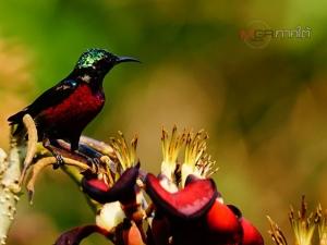 นักส่องนกต่างเดินทางมาเก็บภาพนกหายาก ที่สวนพฤกษศาสตร์พัทลุง