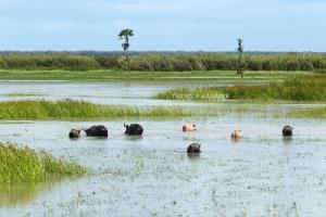 """ล่องใต้ ปั่น 3 ทะเล(จบ) : จาก""""ทะเลน้อย""""สู่""""อ่าวไทย"""" อะเมซิ่งควายน้ำ ชมวิวงามสะพานยาวที่สุดในไทย/ปิ่น บุตรี"""