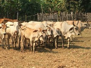 สร้างอาชีพเสริมให้แก่เกษตรกรด้วยการเลี้ยงปศุสัตว์ เพื่อใช้ประโยชน์จากเศษวัสดุเหลือทิ้งทางการเกษตร