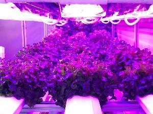 ใช้เทคโนโลยีแสงซินโครตรอนพัฒนาโรงเรือนอัจฉริยะปลูกผักปลอดภัย
