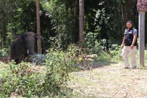 เผยช้างเด็กทำร้ายนักท่องเที่ยวยังไม่คุ้นกับการให้บริการ ตร.แจ้งข้อหาควาญแล้ว