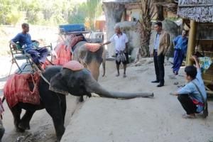 ได้เวลาล้อมคอก ผู้ว่าฯ พังงาสั่งคุมเข้มช้างทัวร์ หวั่นเกิดเหตุซ้ำ