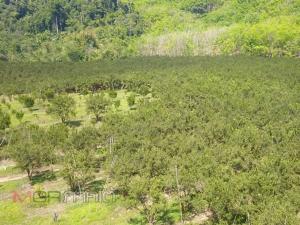 หน่วยพญาเสือบุกยึดคืนแผ่นดินบริเวณป่าหลุมพอ ผงะ! พบนายทุนบุกรุก 91 ไร่ ปลูกส้มโชกุน