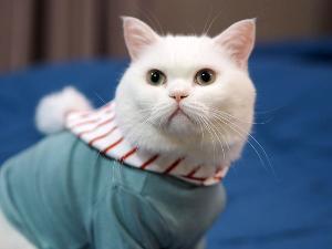 """คนรักแมวห้ามพลาด """"5th Royal Canin International Cat Show 2019"""" ชมแมวสวยหลากสายพันธุ์ดีกรีรางวัลระดับโลก"""