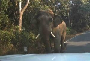 """มาเที่ยวเขาใหญ่ครั้งแรก! หนุ่มนักปั่นชัยภูมิเผยนาทีระทึกขวัญ ถูก """"ช้างป่า"""" วิ่งไล่เผ่นหนีสุดชีวิต"""