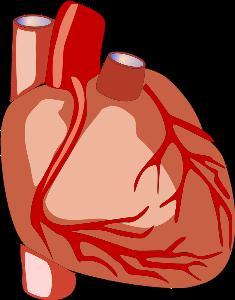 """แพทย์ชี้ """"โรคหัวใจและหลอดเลือดฯ"""" สถิติตายอันดับ 1 ของโลก เพิ่มขึ้นต่อเนื่อง อาการขั้นรุนแรง ผ่าตัดเปลี่ยนหัวใจ เพื่อคุณภาพชีวิตที่ดี-ชีวิตใหม่"""