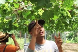 ฮือฮา ! แหล่งท่องเที่ยวใหม่ ลุงวัย 71 ทิ้งสวนปาล์มหลังมาปลูกองุ่นได้ผลดีเกินคาด