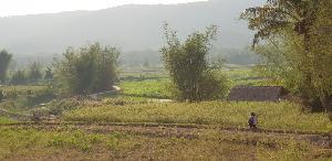 แปลงเกษตรผสมผสานใช้น้ำซับที่ต่อท่อจากภูสูง