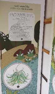 ข้อมูลนิทรรศการเกี่ยวกับดอกหีด ณ ศูนย์การเรียนรู้ประมงเชียงคาน