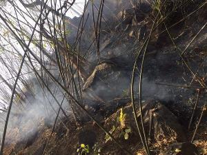 สลด! ไฟป่าทำพิษ พบซากสัตว์ป่าถูกเผาตายเกลื่อน วอนทุกภาคส่วนช่วยกันดูแล