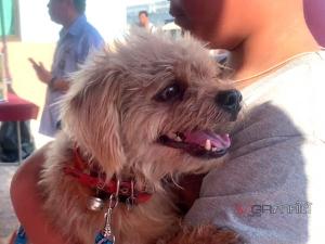 ปศุสัตว์ตรังเผยปีนี้ยังขาดแคลนวัคซีนโรคพิษสุนัขบ้า พบมีการติดเชื้อแล้วใน 3 อำเภอ