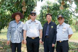 """ฉะเชิงเทรา เดินหน้าส่งเสริม """"มะม่วง"""" เป็นสุดยอดผลไม้ไทย"""