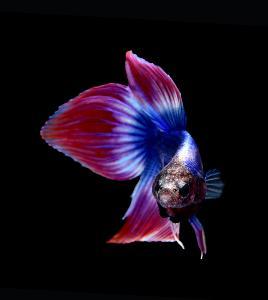 """ปิดเทอมนี้ขอเชิญน้องๆหนูๆร่วมชมงาน """"Aqua Life Exhibition"""""""