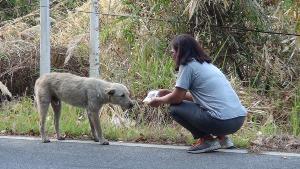 สุดสะเทือนใจ! คนแห่แชร์ภาพสุนัขนั่งรอเจ้าของริมถนนน่านกว่า 4 เดือนไม่ยอมไปไหน