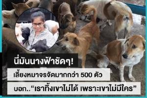 """นางฟ้าของหมาจรจัด กว่า 500 ชีวิตที่เธอดูแล """"แก้วตา-ธัญญาพร ตู้ทอง"""""""