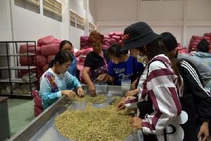 ซีพีมุ่งมั่นยกระดับการพัฒนาอาชีพกลุ่มเกษตรกร จัดศึกษาดูงานโรงงานผลิตกาเเฟ จ.เชียงใหม่ หนุนสร้างอาชีพเพื่อสังคมและชุมชน