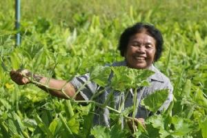 เสนอ 3 มาตรการสนับสนุนเกษตรยั่งยืน